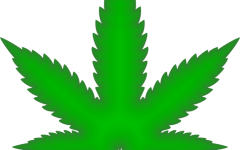 Marijuana, closer than ever