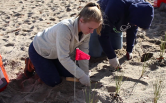 Students Help to Restore Dunes on Salisbury Beach