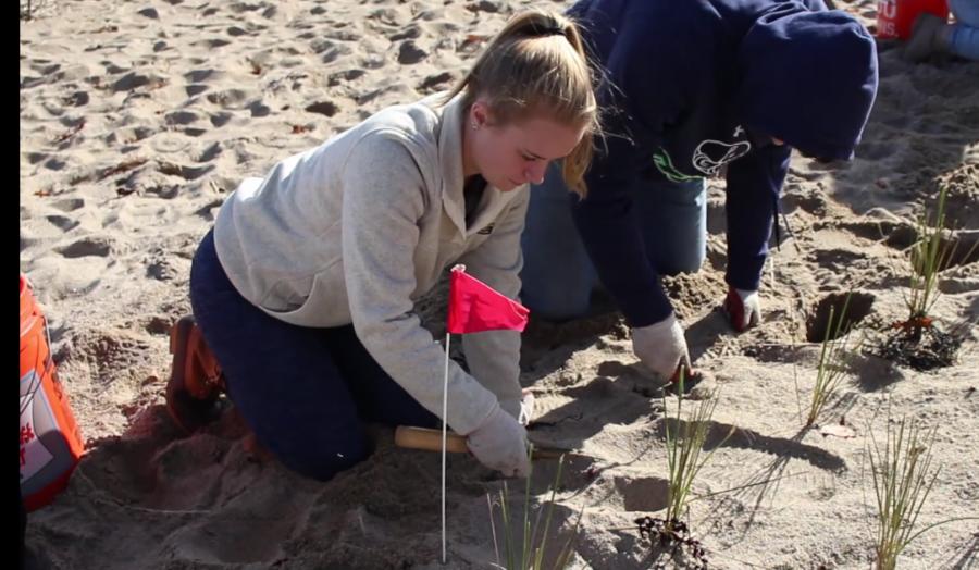 Students Help to Restore Dunes on Salisbury Beach