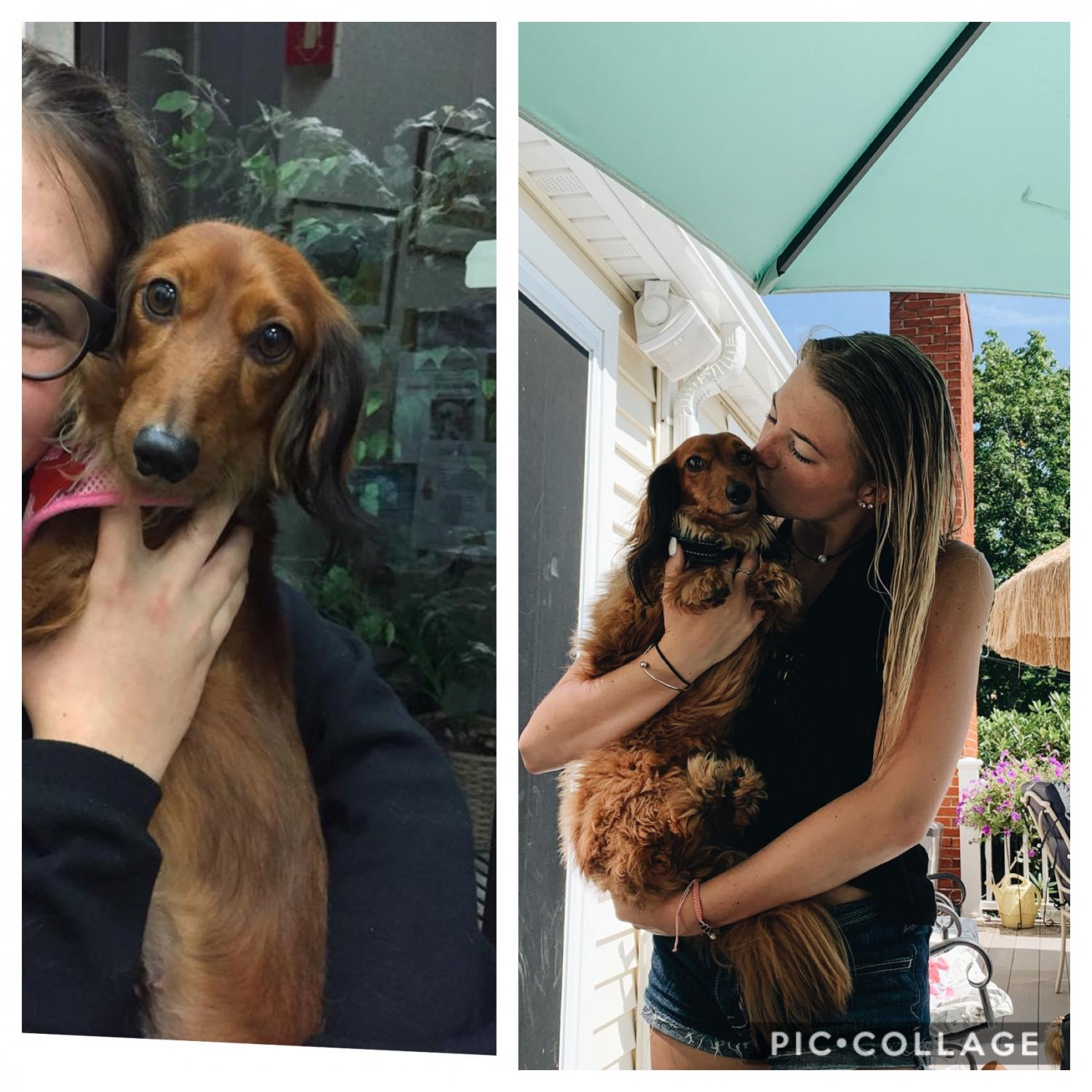 "(Left Picture: Trixie, a three year old malnourished and underweight Mini-Dachshund was rescued by the Harris family in 2016.) (Right Picture: Trixie, 3 years later in 2019, at an average weight and perfect health.) ""Rescuing this dog changed our lives. We got so lucky. She is the sweetest and most loving dog. I can speak for my whole family when I say, we can't picture life without her,"" said Karen Harris"