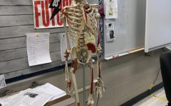Here is Dr. Moore's class Skeleton Sketchy watching over the class
