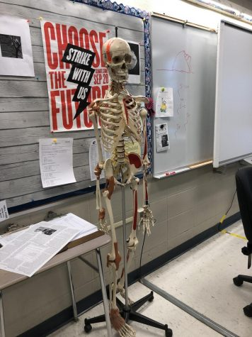The Possibilities of A New Anatomy Course